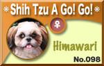 Shih Tzu A Go! Go!.jpg